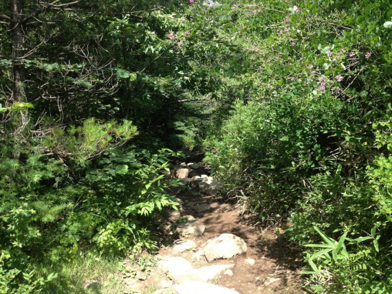 飯盛山の道
