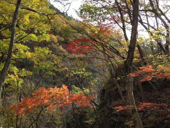 龍王峡の川沿いの紅葉