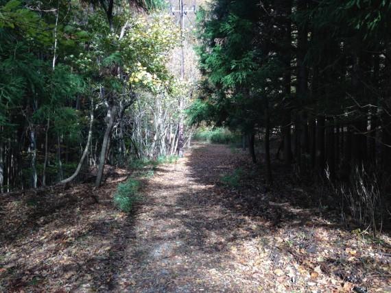 発電所前の森のようなところ