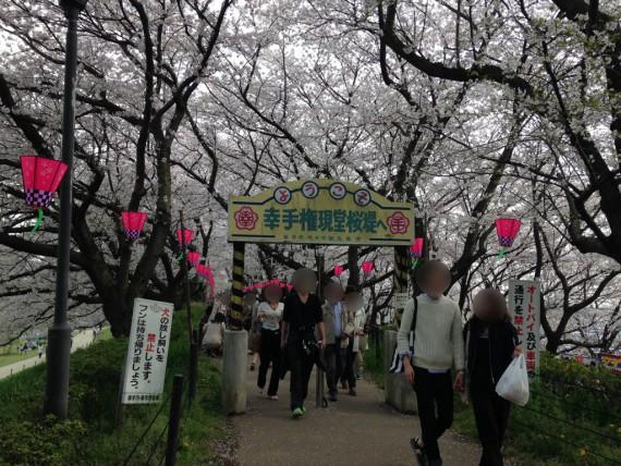 幸手権現堂公園の桜トンネルの入口