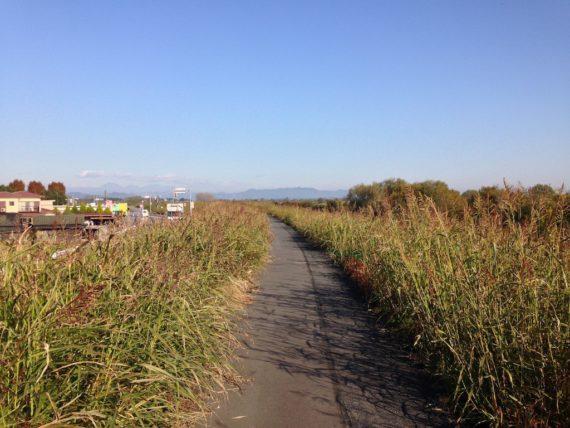 渡良瀬遊水地を沿う道の周りには大量のススキ