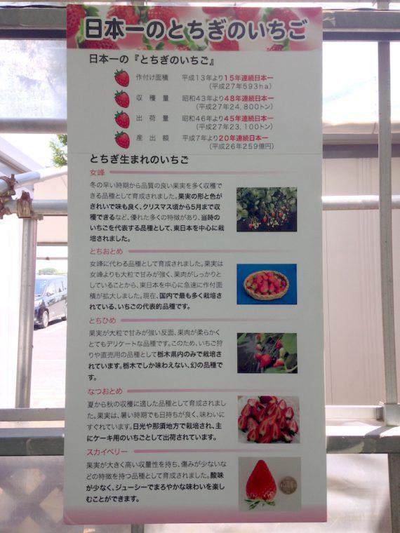 日本一のとちぎのいちご