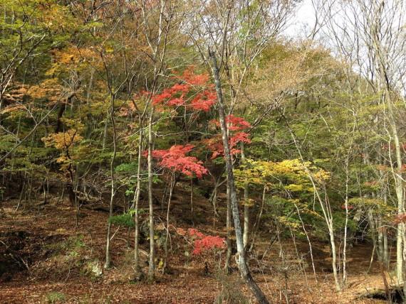 龍王峡の川沿いの紅葉 その2