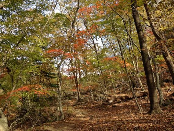 林の中にあるわずかな紅葉