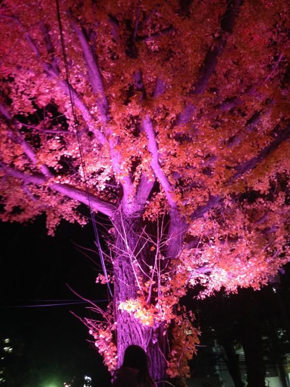 イチョウの木のライトアップ