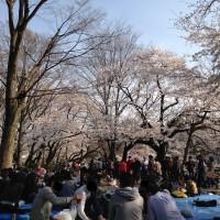 酔っている人もいる井の頭恩賜公園の花見の風景