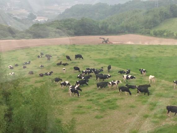 ワンダーパノラマから観る牛さん達