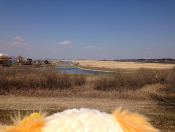 帰り道のプレーズと渡良瀬遊水池