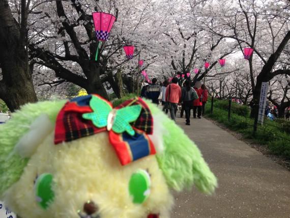 ペリドットと桜並木に挟まれた道