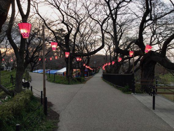 権現堂公園の周りに連なる桜並木