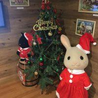 クリスマスツリーとショコラウサギちゃん