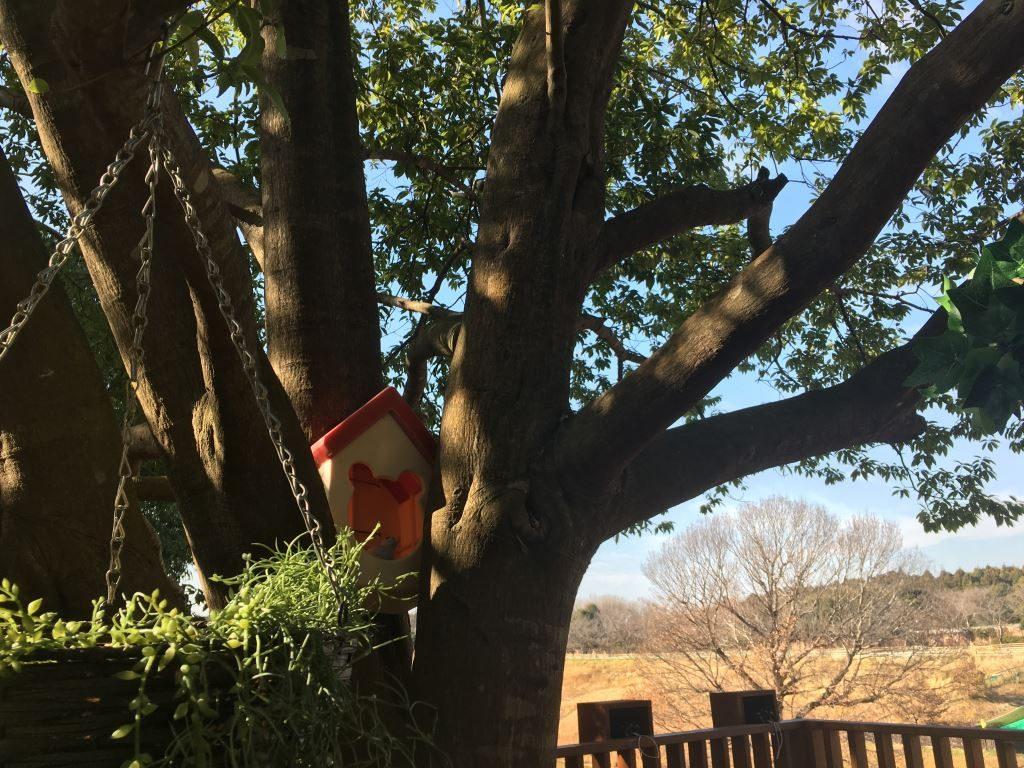 ツリーハウスそばにある鳥小屋