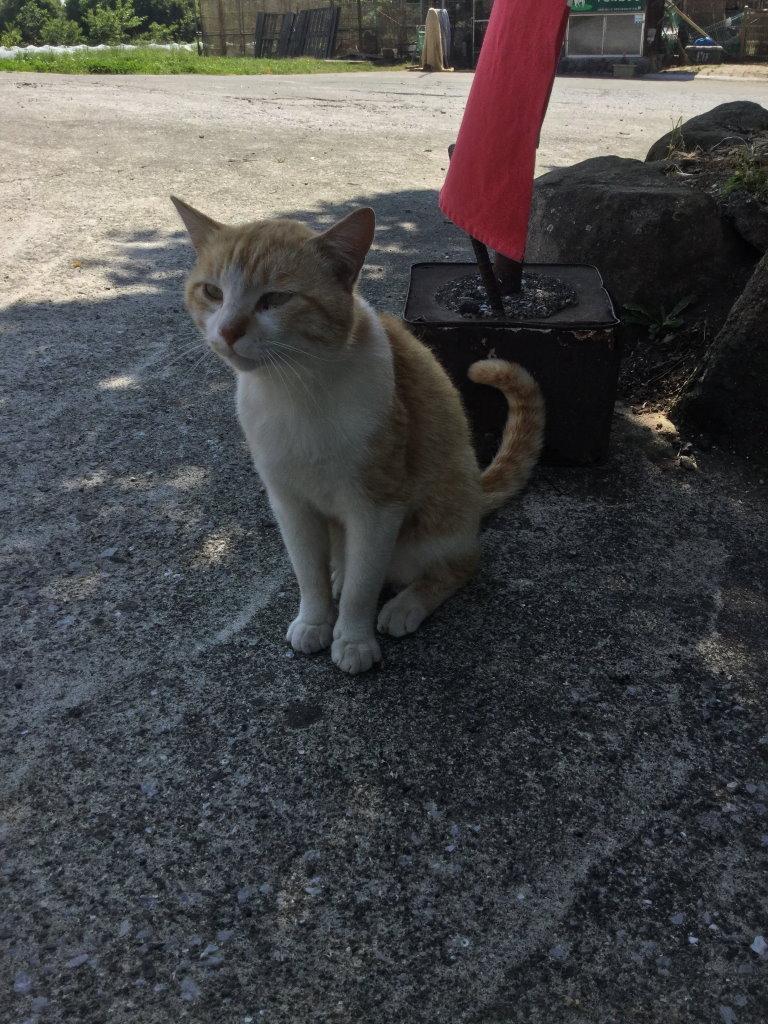 日陰で座るすずらん食品館のネコ