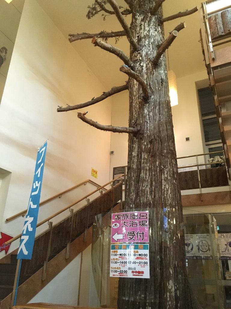 中に入ると聳え立つ高い木