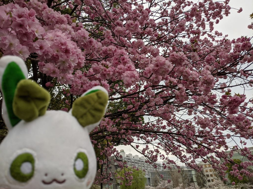 上野公園に咲く桜とカッシーくん