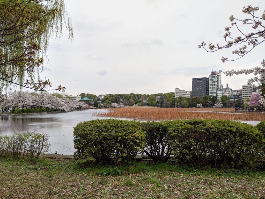 上野公園の様子